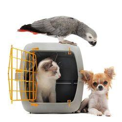 Κλουβιά μεταφοράς σκύλου και γάτας