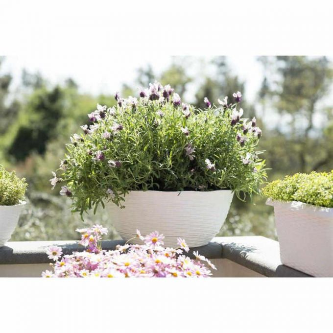 BAMA ITALY Γλάστρα Ψάθα Χαμηλή με Πιάτο Πλαστική Λευκό PAGLIA