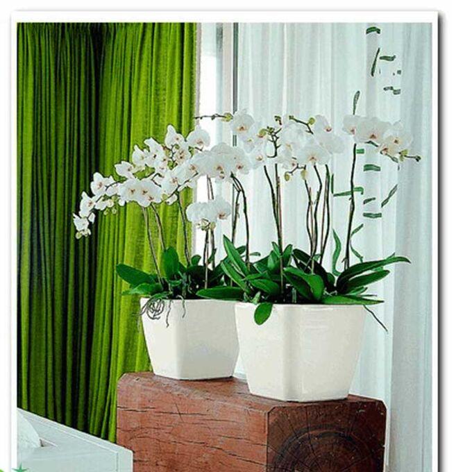 LECHUZA QUADRO 28 LS Premium Επιτραπέζια Γλάστρα 28x28x26cm ΑΥΤΟΠΟΤΙΖΟΜΕΝΗ με Δοχείο Φύτευσης Λευκή Γυαλιστερή Γερμανίας