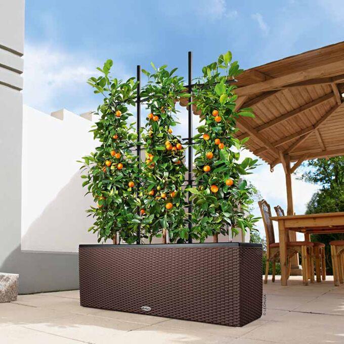 LECHUZA Trio 30 Cottage Ζαρντινιέρα 100x32.5x34.5cm Αυτοποτιζόμενη με 3 Κάδους Φύτευσης Καφέ RATTAN Γερμανίας